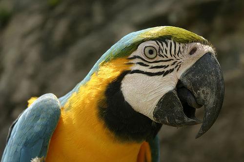 randonnée amazonie
