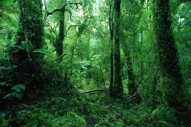deforestation-foret