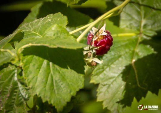 fruit-rando-vosges